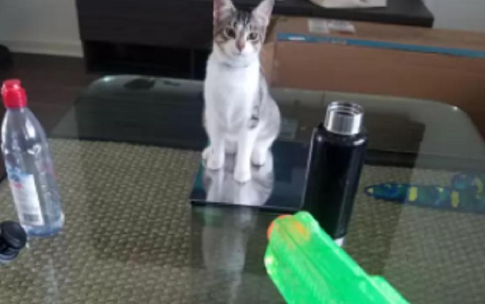 gatti mascalzoni-pistola acqua