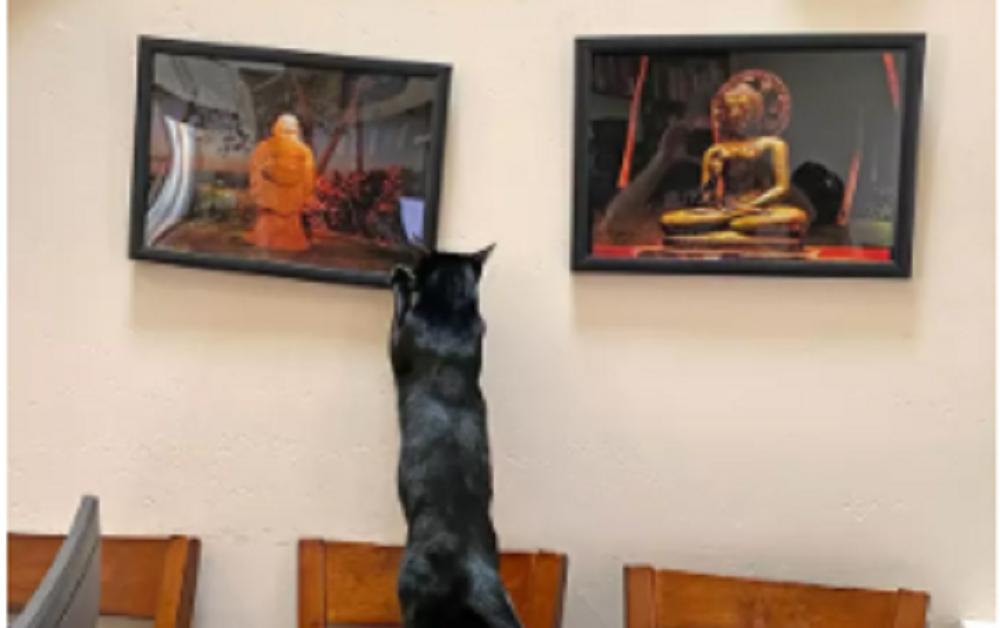 gatto con quadri