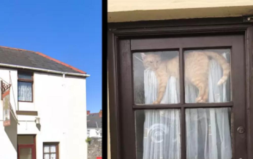 gatto su porta