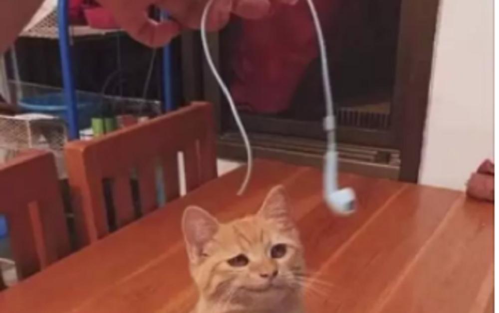 gatti mascalzoni-cuffie