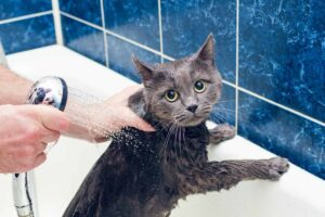 gatto che fa il bagno
