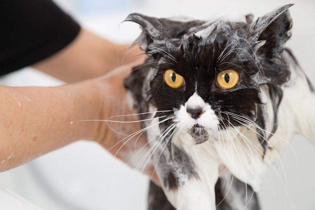 gatto fa il bagnetto
