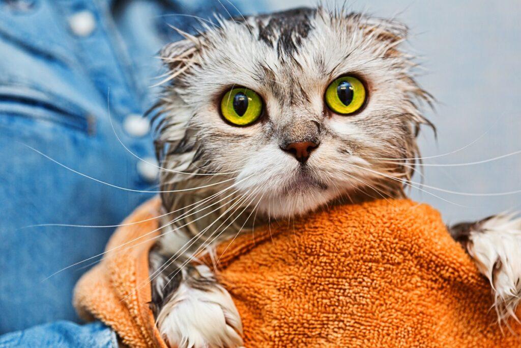 gatto arrabbiato avvolto nell'asciugamano