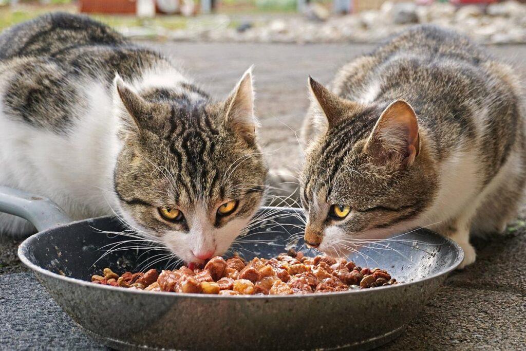 gatti che mangiano carne