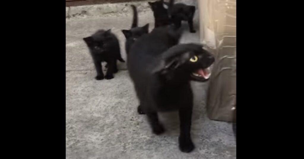 mamma gatta si arrabbia con papà gatto