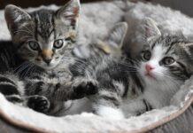 gattini escono in giardino senza mamma gatta