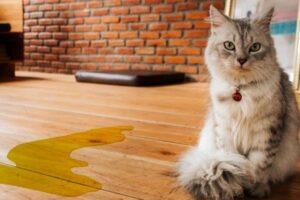 gattino a che età spruzza