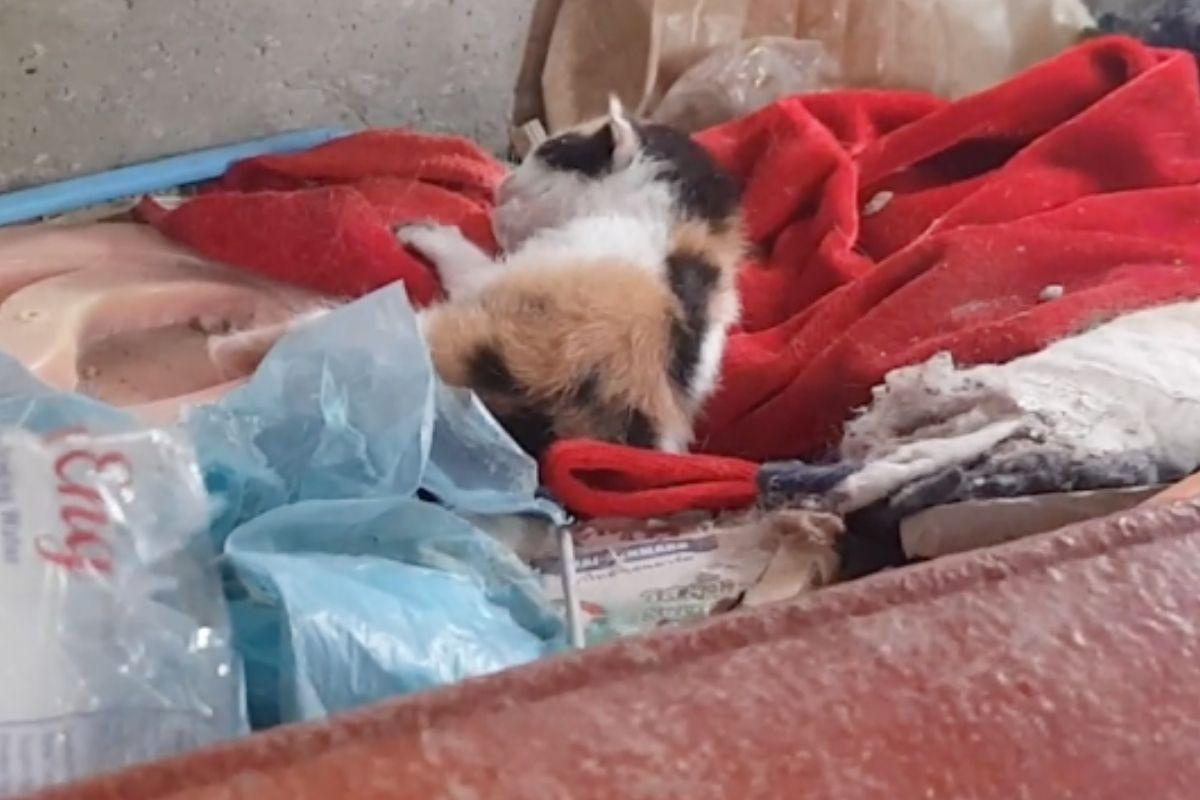 gattino tra le coperte in mezzo ai rifiuti