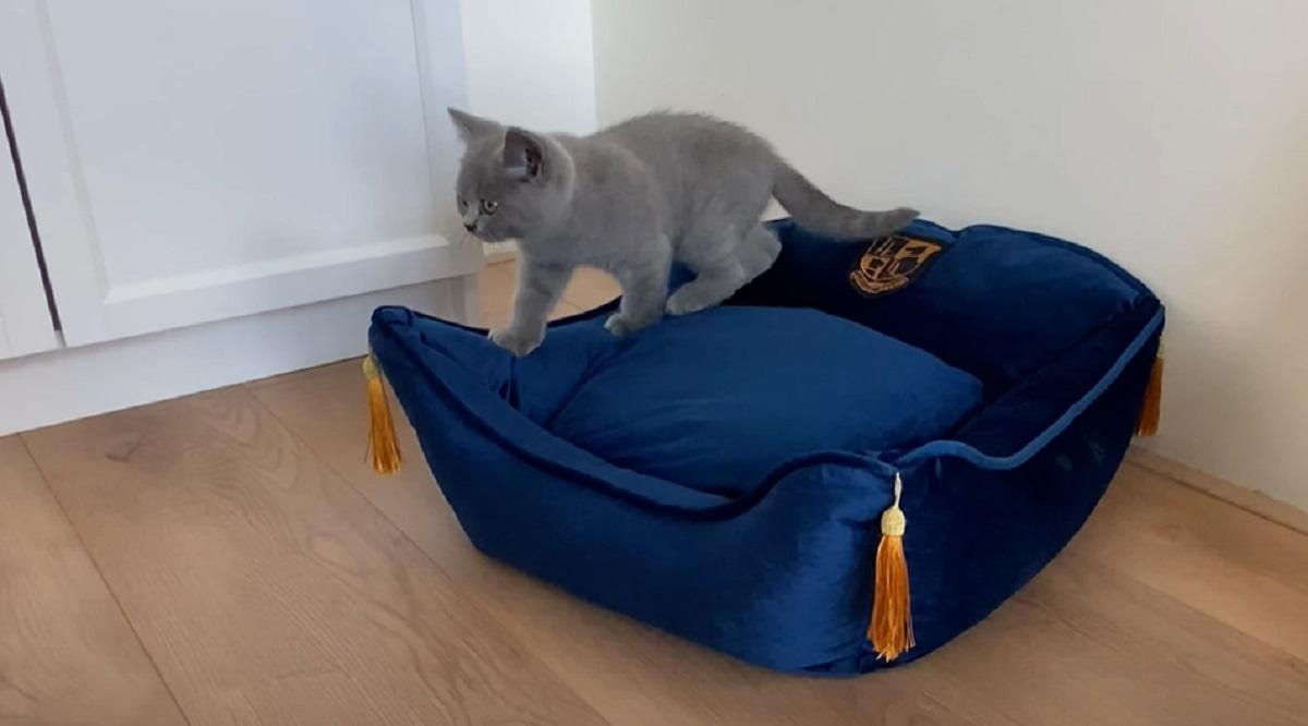 cuccia gatto esplora