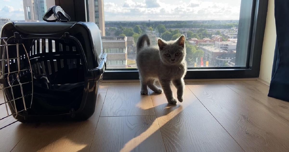 esplora casa micio