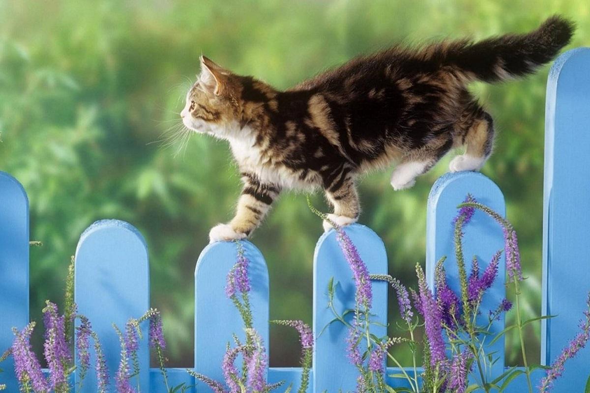 gattino cammina su staccionata