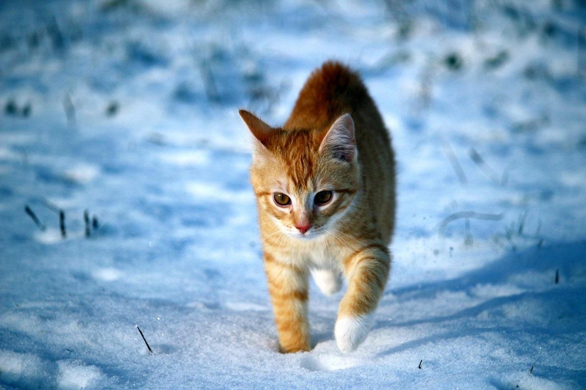 gattino cammina nella neve
