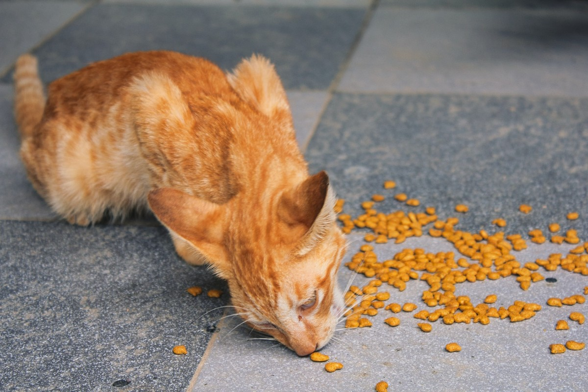 gattino mangia crocchette