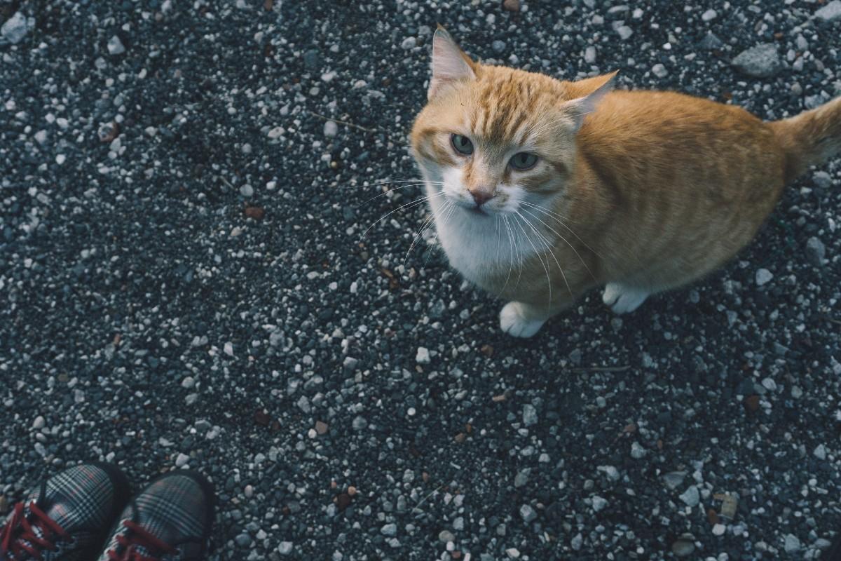 gattino che non salta mai