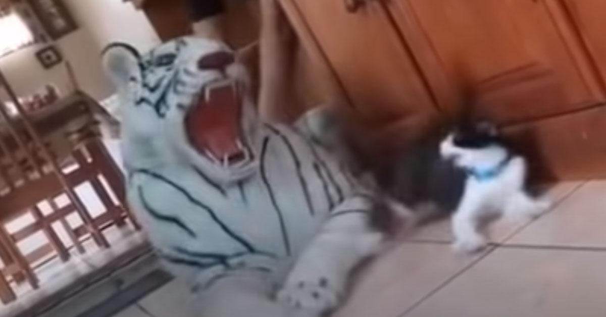Gatto contro tigre peluche