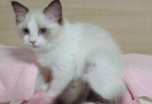 gattino a letto