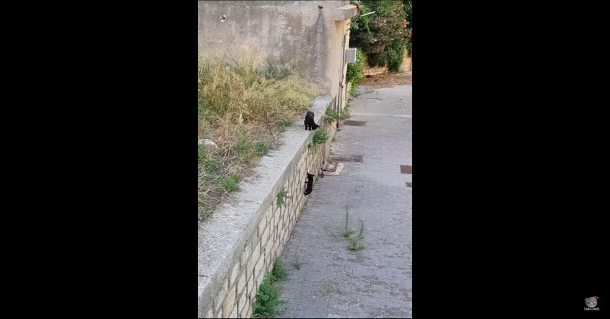 gattino caduto da un muro ritrova mamma