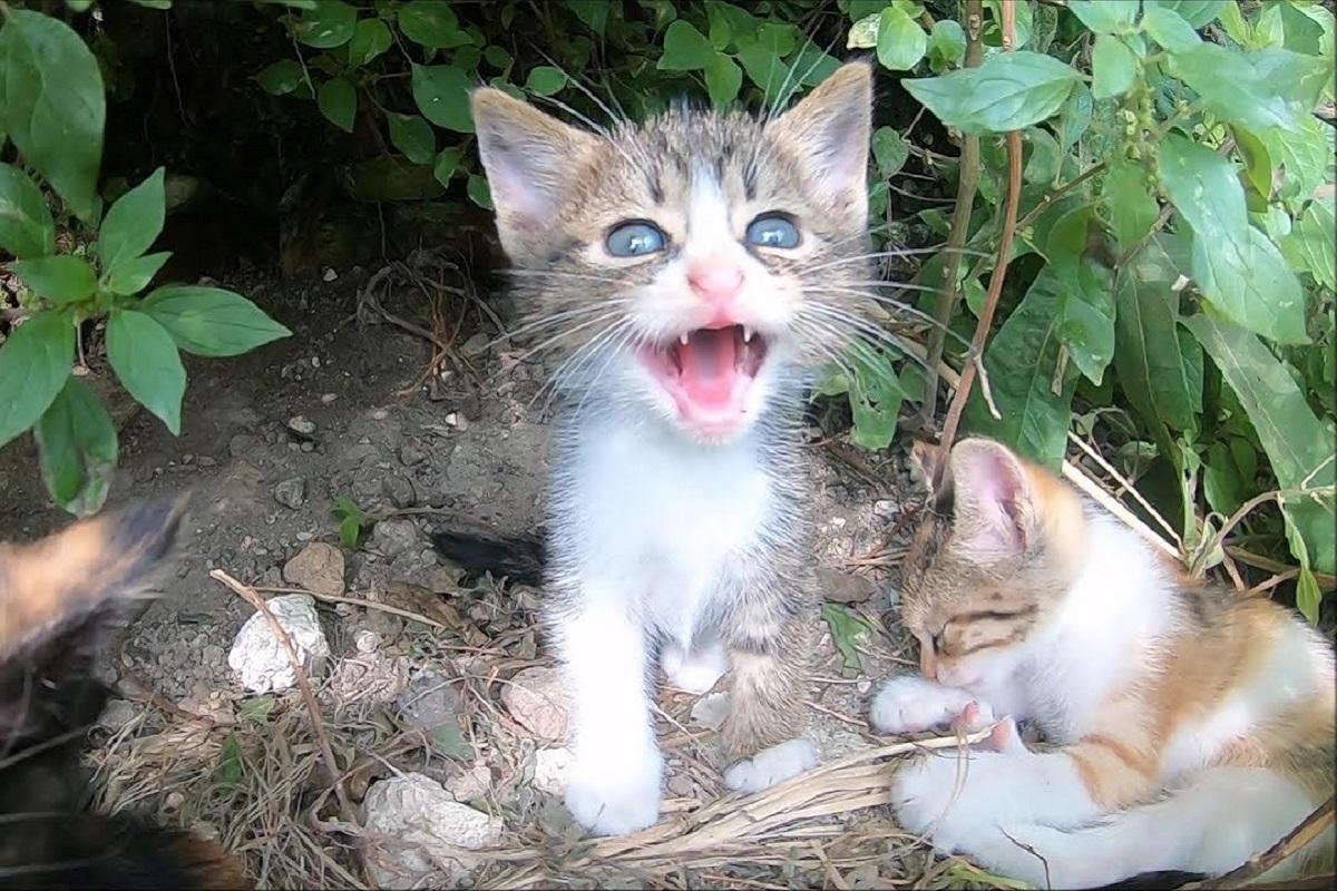 cucciolata di gattini selvatici