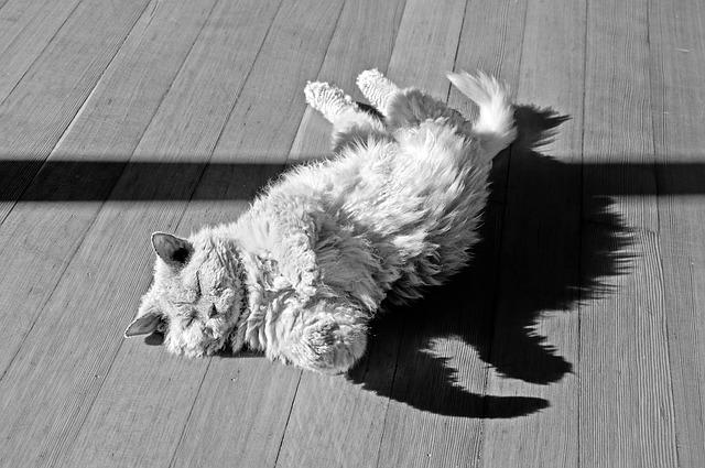 gatto che rotola