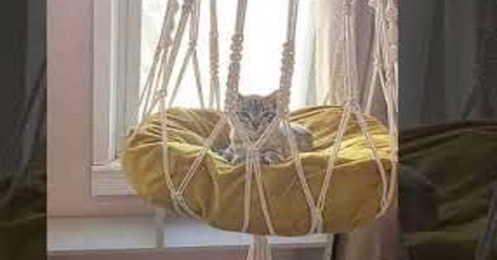 gatto comodo nella cuccia in macrame