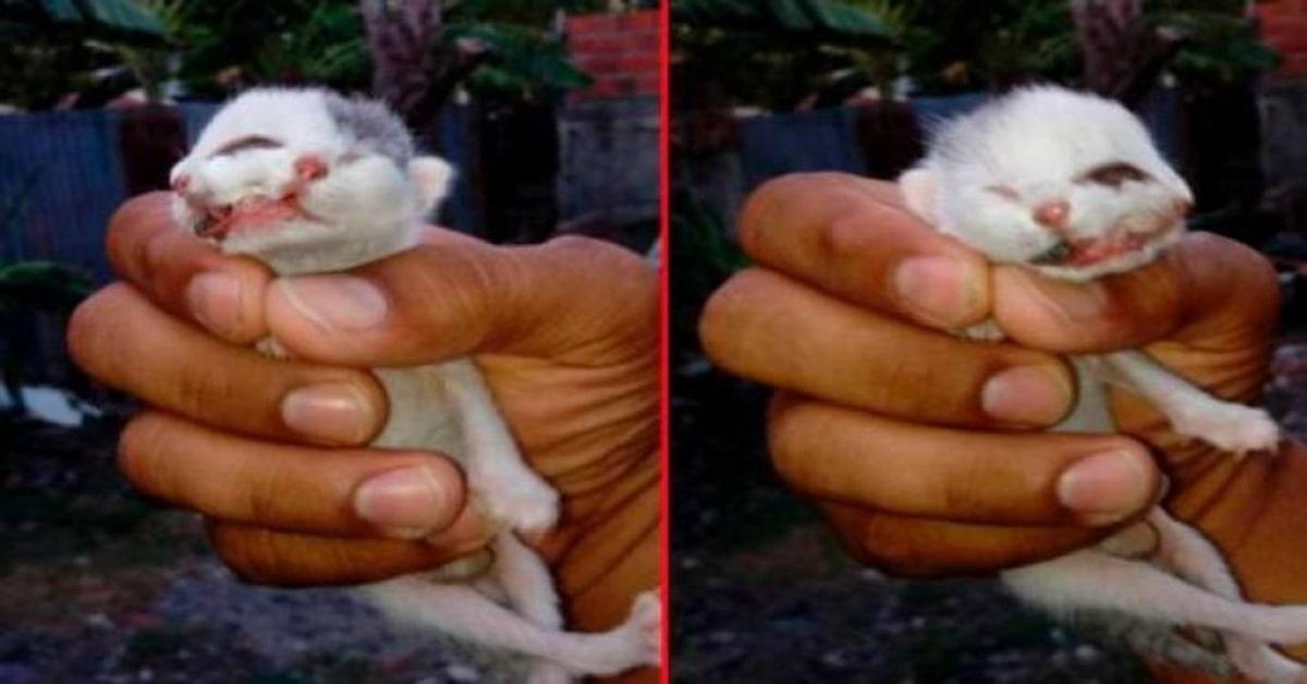due foto gattino con due facce