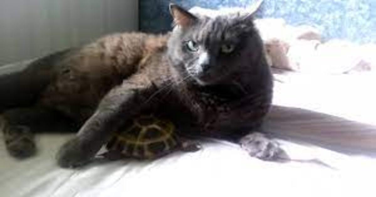 gatto abbraccia tartaruga