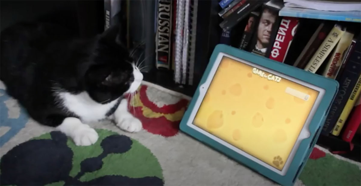 gatto che guarda l'ipad