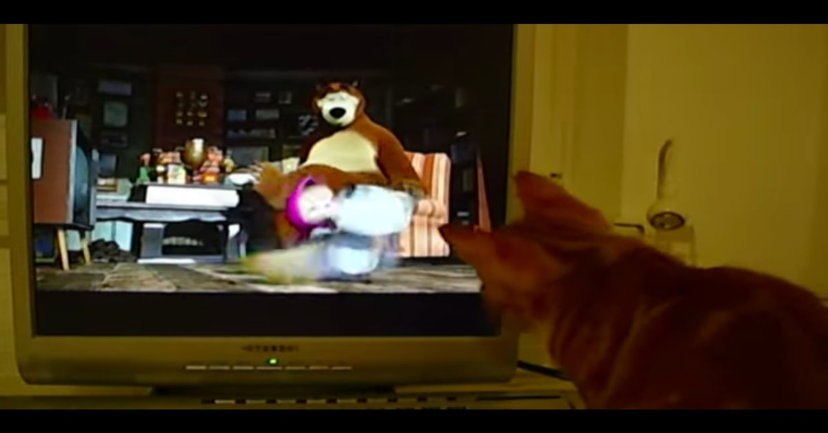 gatto interessato a Masha e Orso