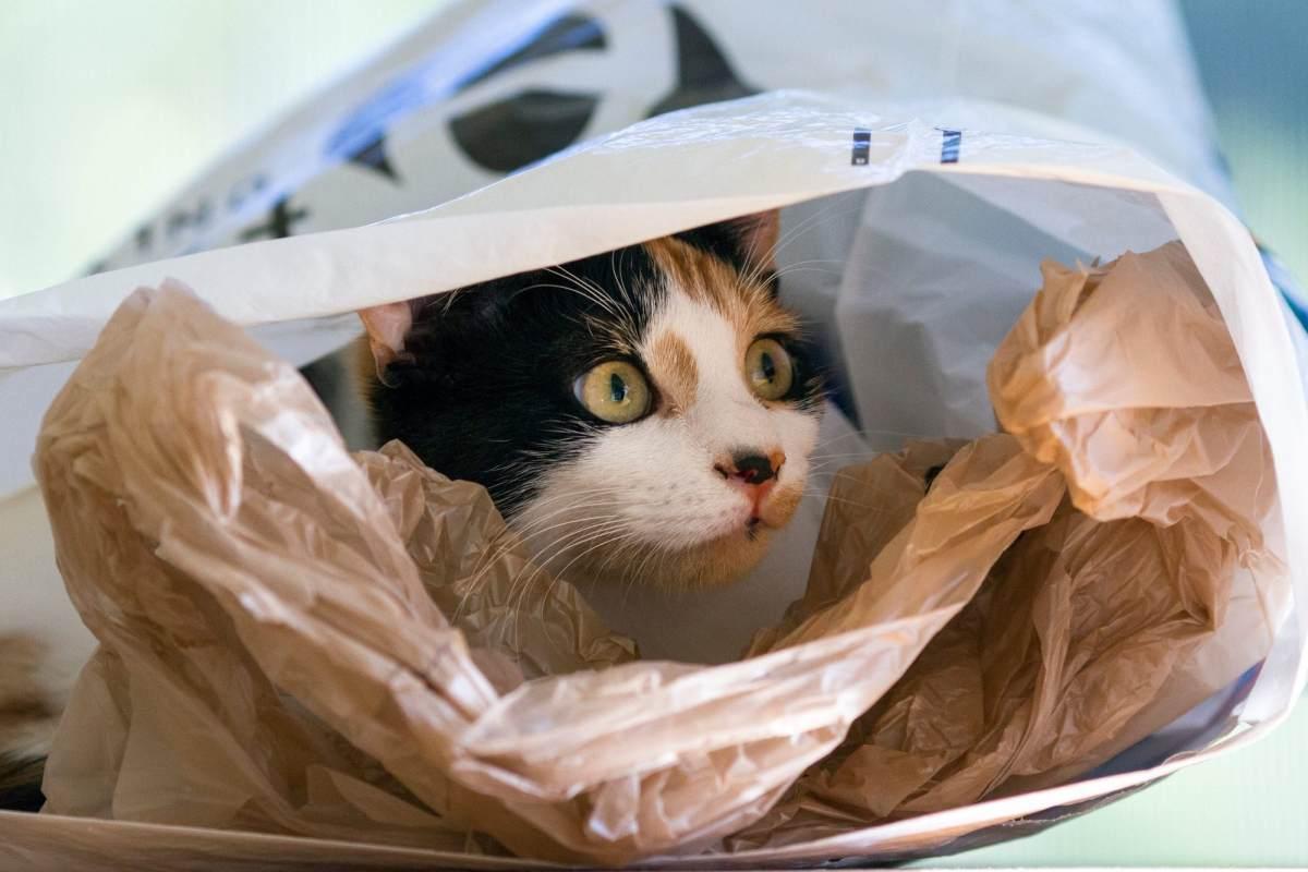 gatto nascosto dentro a un sacchetto