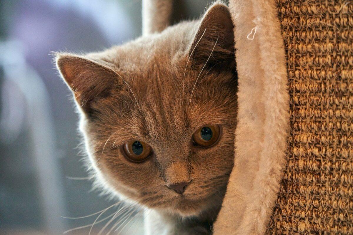 gatto nella cuccia