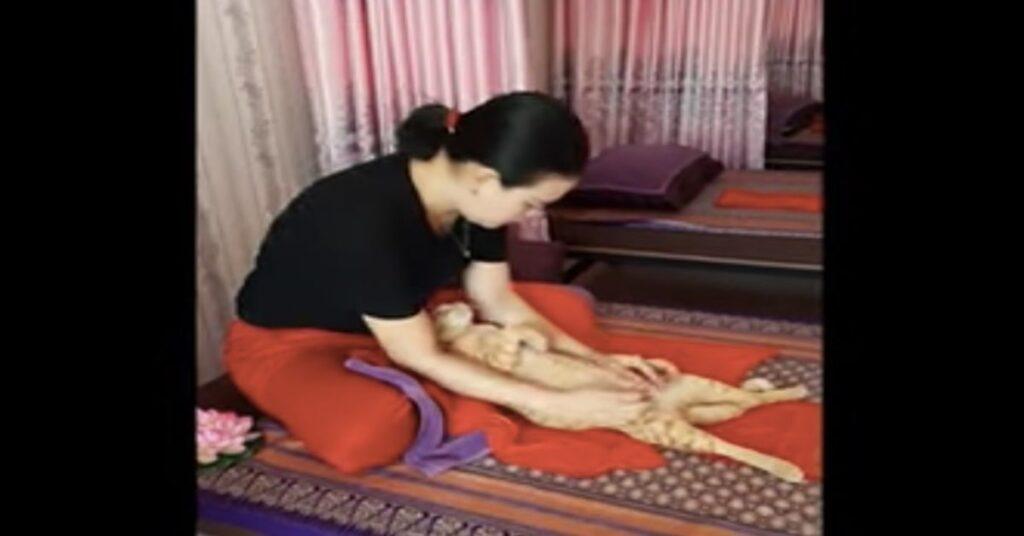 al gatto viene fatto massaggio tailandese