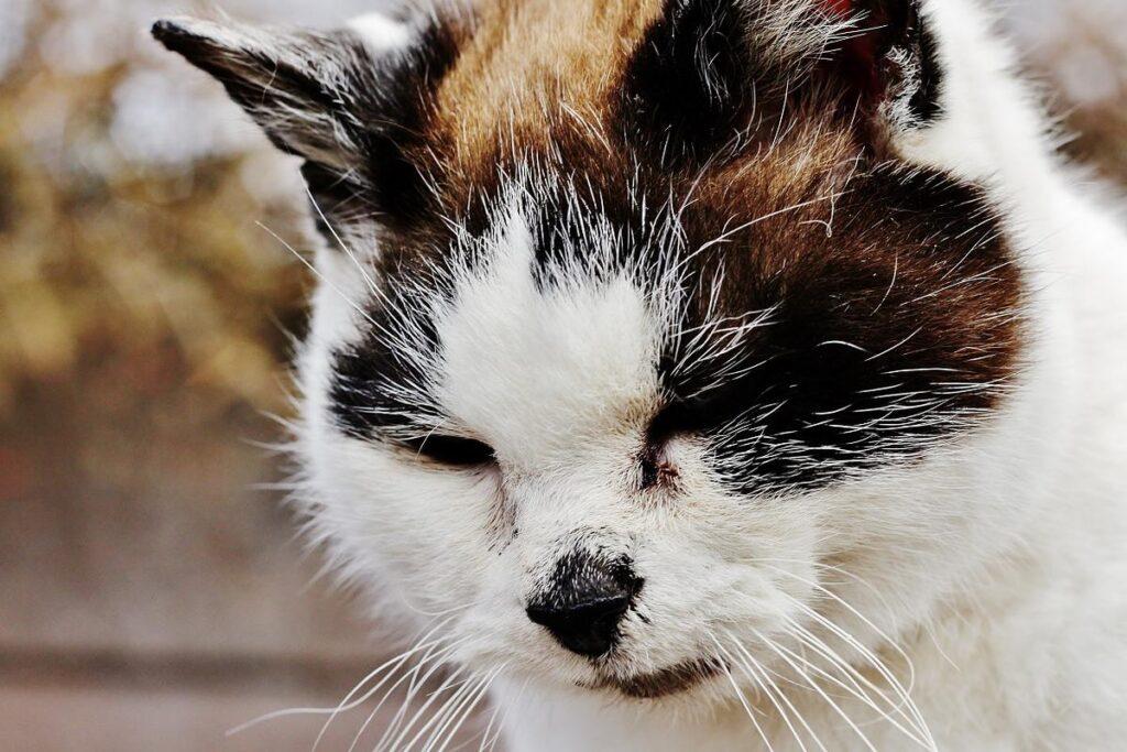 gatto anziano