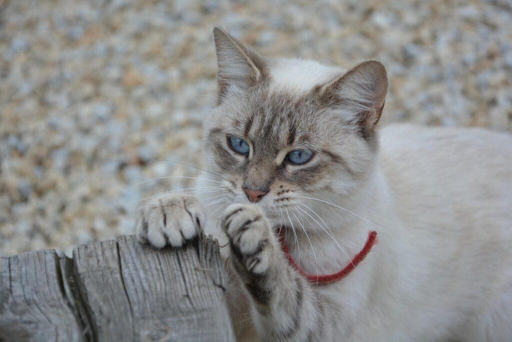 gatto graffia legno