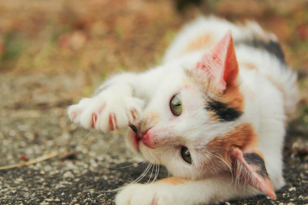 gattino gioca con una foglia
