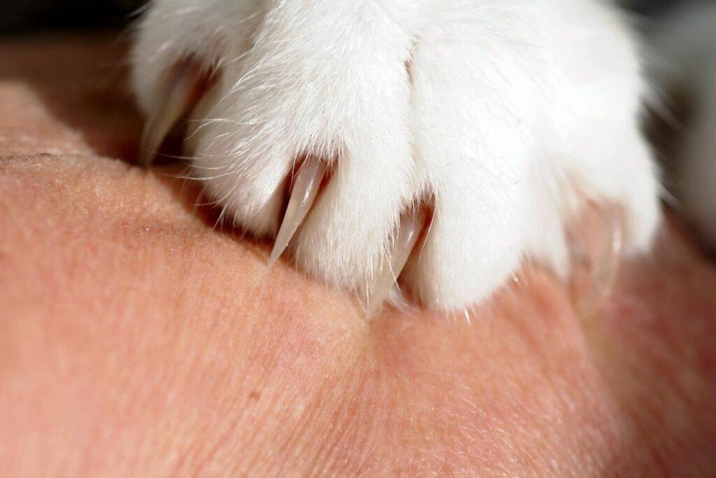 graffio del gatto