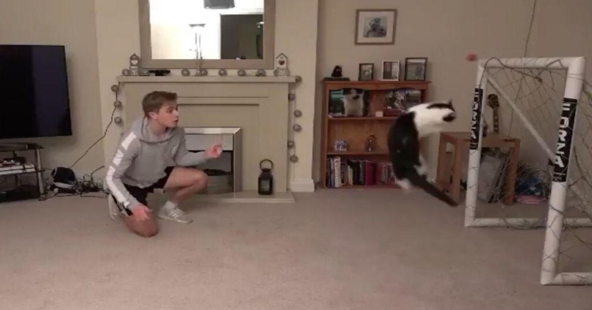 bravissimo gatto portiere