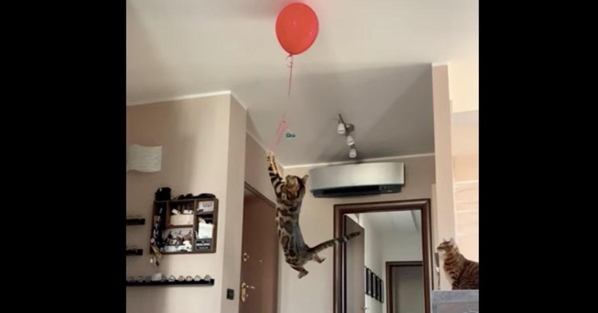gatto salta per prendere palloncino