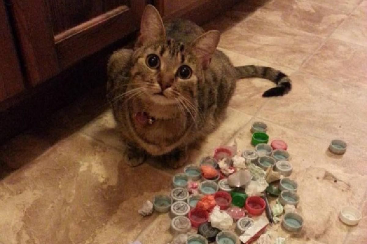 gatto con tappi di plastica