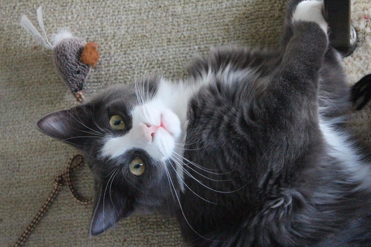 gatto che gioca con un pupazzo
