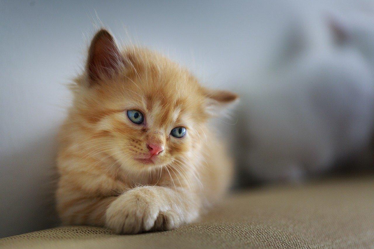 gatto cucciolo