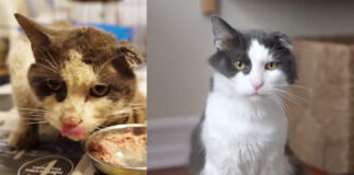 gatto salvato, prima e dopo