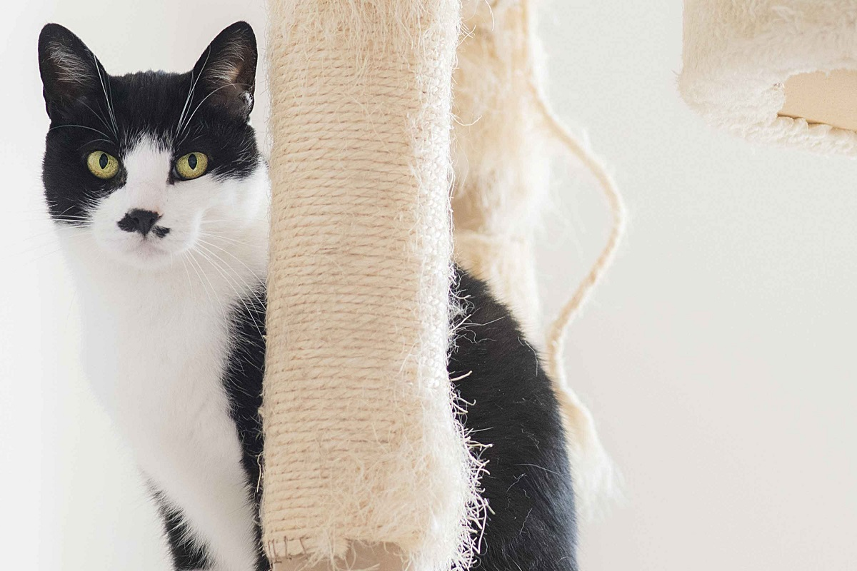gatto e tiragraffi