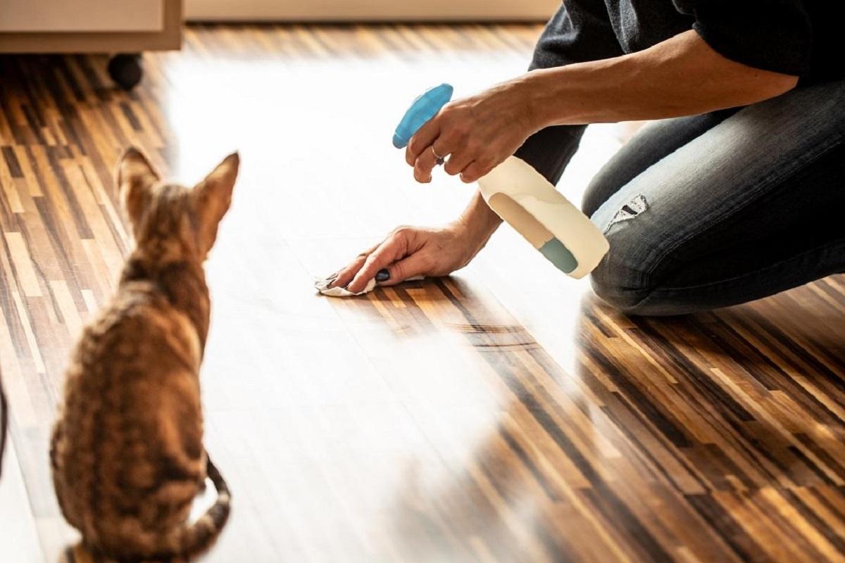 detersivo per pipì del gatto