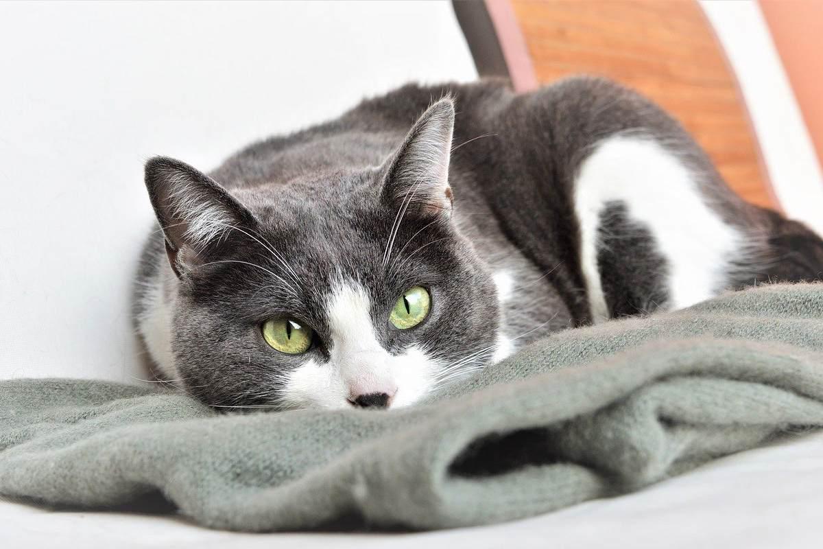 gatto che dorme su una coperta