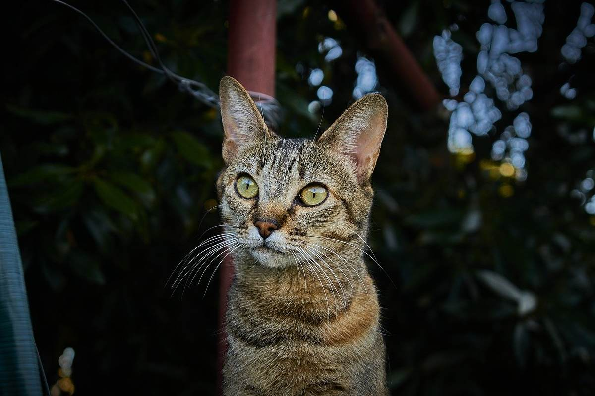 gatto tigrato di sera in giardino