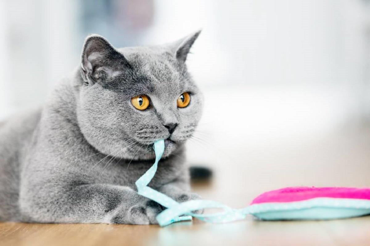 gatto e nastri di stoffa