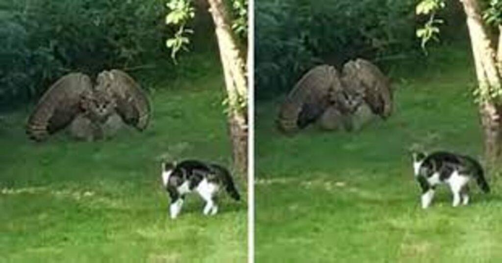 gatto e gufo si cercano di spaventare a vicenda