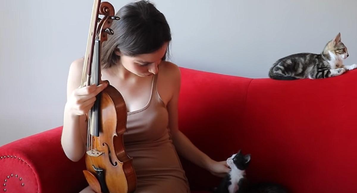 mamma musicista gatti
