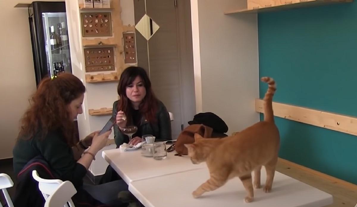 tavola gatti caffè