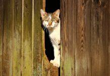 gattino europeo lezioni di fuga video abilità